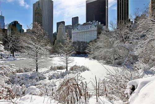 Central Park New York Winter Activities